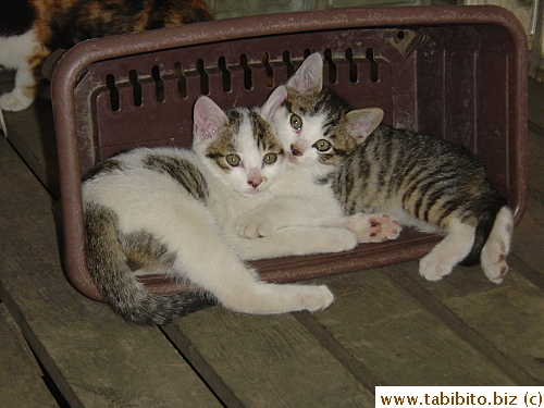Tabby on the right is now separated with his brother…(sigh)